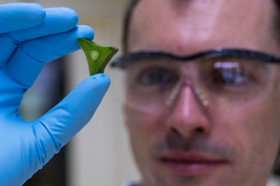 Biomaterial researcher Andraz Resetic examines a sample of a special cactus from South America.